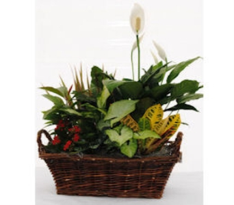 Dish Gardens Delivery Waverly NY Jaynes Flower Shop