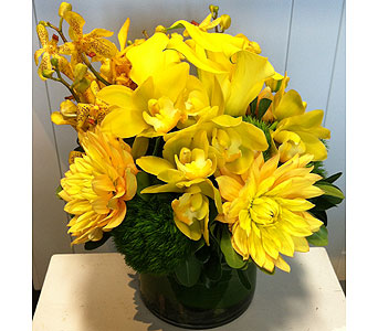 Mellow Yellow in Thornhill ON, Orchid Florist