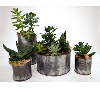 Metal Succulent Gardens in Detroit and St. Clair Shores MI, Conner Park Florist