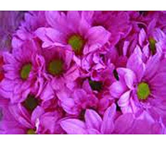 Flower Market Special - Purple Daisies in Timmins ON, Timmins Flower Shop Inc.