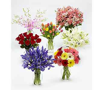 Monthly Flower Gift Plan in Kingston ON, Pam's Flower Garden