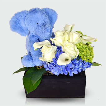 It's a Boy - Baby Boy Gift Basket in Dallas TX, Dr Delphinium Designs & Events