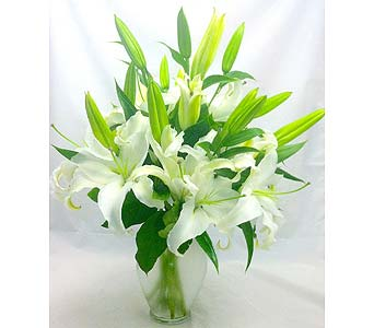 White Lilies in Raleigh NC, North Raleigh Florist