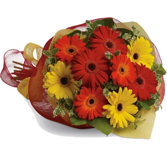 Cut Gerbera Flowers in Lunenburg NS, Seaside Flowers