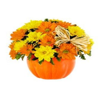 Daisy Pumpkin Delight in Princeton, Plainsboro, & Trenton NJ, Monday Morning Flower and Balloon Co.