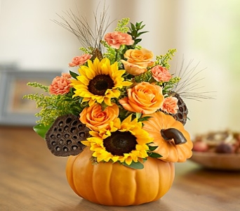 Pennington Pumpkin in Princeton, Plainsboro, & Trenton NJ, Monday Morning Flower and Balloon Co.
