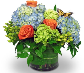 Blue Skies and Butterflies by Nature Nook� in Cleves OH, Nature Nook Florist & Wine Shop