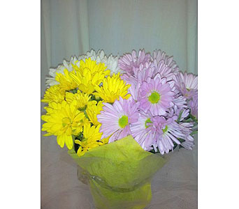 French Wrapped Daisy Bouquet in New Paltz NY, The Colonial Flower Shop