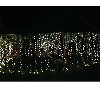 Curtain Lights in Loudonville OH, Four Seasons Flowers & Gifts