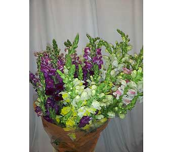 Snapdragon Wrapped Bouquet in New Paltz NY, The Colonial Flower Shop