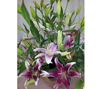 Stargazer Lily Bouquet in New Paltz NY, The Colonial Flower Shop