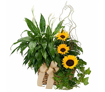Plants and Sunshine in Schaumburg IL, Deptula Florist & Gifts, Inc.