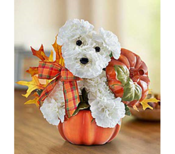 A DOG-ABLE FOR FALL in Yelm WA, Yelm Floral