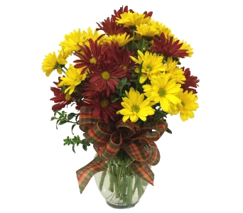 Fall For Daisies By Country Greenery in Moorhead MN, Country Greenery