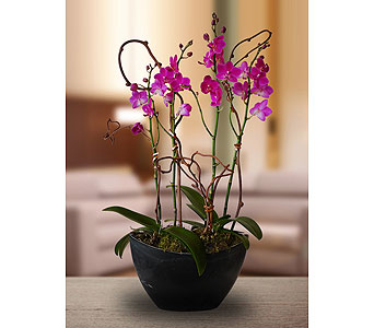 Double Purple Orchid Planter in Dallas TX, In Bloom Flowers, Gifts and More
