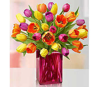 afr-11 vase of 20 tulips in San Antonio TX, Allen's Flowers & Gifts