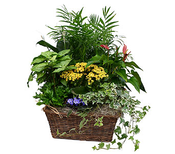 Bountiful Basket in Dearborn Heights MI, English Gardens