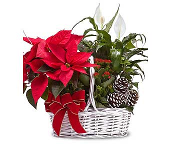 Blooming Poinsettia Basket in Ferndale MI, Blumz...by JRDesigns