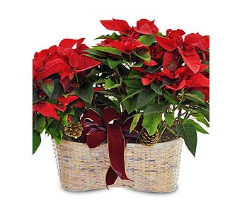 Merry Poinsettia Double Basket in Ferndale MI, Blumz...by JRDesigns