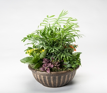 Castella Bowl Mix Planter in Timmins ON, Timmins Flower Shop Inc.