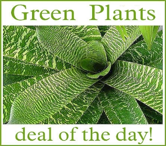 Green Plant Deal of the Day in Moline IL, K'nees Florists