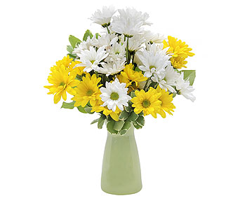 Daisy Craisy in send WA, Flowers To Go, Inc.