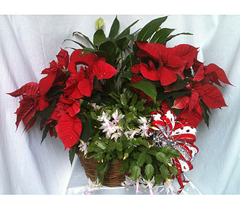 The Blooms of Christmas in Macon GA, Lawrence Mayer Florist