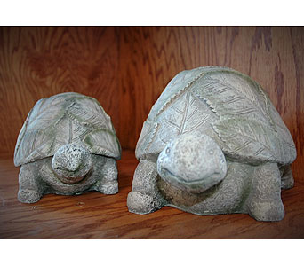 Turtles in Northfield MN, Forget-Me-Not Florist