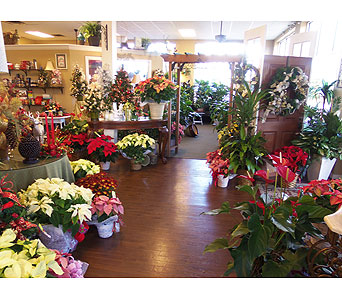 Christmas Delivery Ocala Fl Heritage Flowers Inc