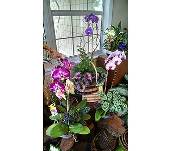 Orchid Garden in Largo FL, Rose Garden Flowers & Gifts, Inc