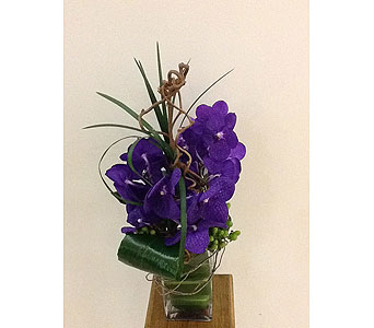 Precious Purple Orchids in Houston TX, River Oaks Flower House, Inc.