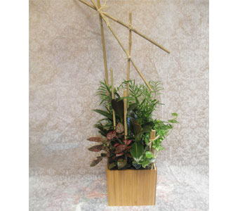 Bamboo Design in Neenah WI, Sterling Gardens