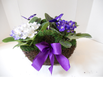 African Violet Bouquet in Nashville TN, Emma's Flowers & Gifts, Inc.