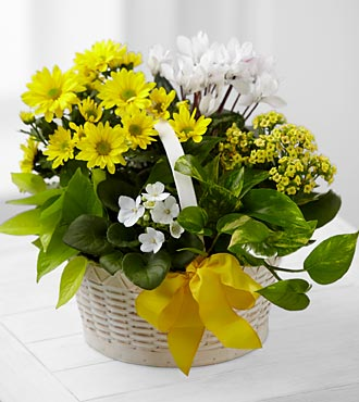 A Bit of Sunshine Basket in Silver Spring MD, Colesville Floral Design