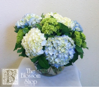 Mighty Hydrangea in Charlotte NC, The Blossom Shop
