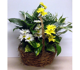 Planter with Daisies - 10 inch basket in Wyoming MI, Wyoming Stuyvesant Floral