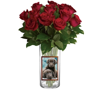 Red Rose Classique in Pinellas Park FL, Hayes Florist