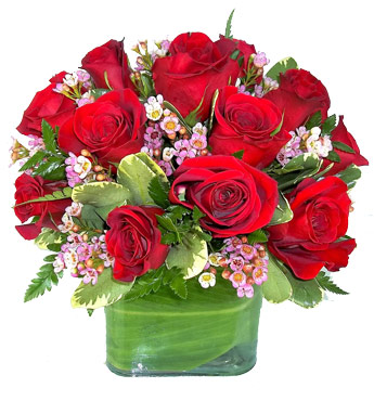 Contempo Red Roses in Elmhurst IL, Pfund & Clint Florist