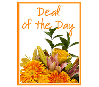 Deal of the Day in Brockton MA, Holmes-McDuffy Florists, Inc 508-586-2000