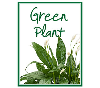 Green Plant Deal of the Day in Muscle Shoals AL, Kaleidoscope Florist & Gifts