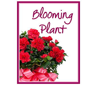 Blooming Plant Deal of the Day in Stamford CT, NOBU Florist & Events