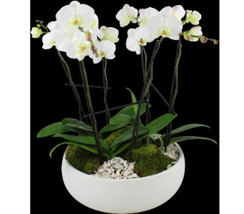 White orchid in White ceramic bowl in Wellington FL, Wellington Florist