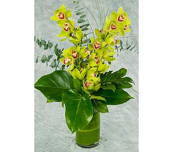 Two Stems of Cymbidium Orchids Arrangement in Great Neck NY, United Floral