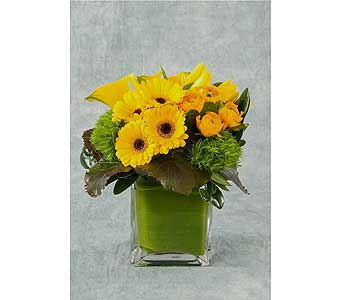 Mellow Yellow Cube Arrangement in Great Neck NY, United Floral