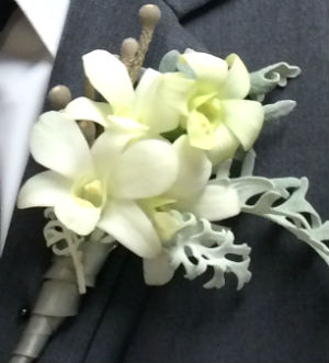 White Orchid and Dusty Miller in Farmington CT, Haworth's Flowers & Gifts, LLC.