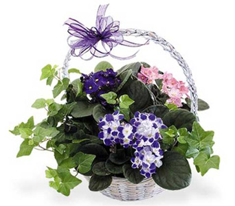 Violets & Ivy in Baltimore MD, Raimondi's Flowers & Fruit Baskets