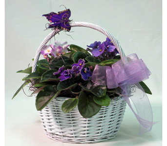 Just Violets in Baltimore MD, Raimondi's Flowers & Fruit Baskets