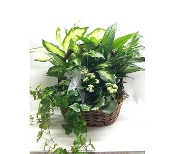 Plant basket in Quincy MA, Fabiano Florist