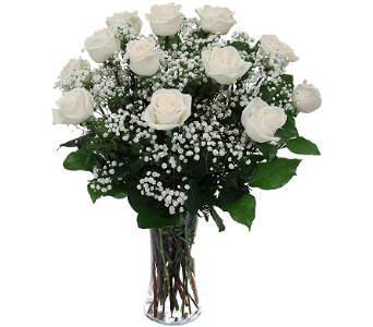 Dozen White Roses in Waterbury CT, The Orchid Florist
