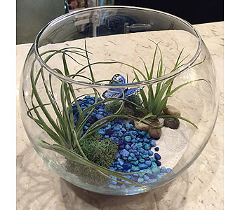 Air Plant Eco Bowl in Princeton, Plainsboro, & Trenton NJ, Monday Morning Flower and Balloon Co.